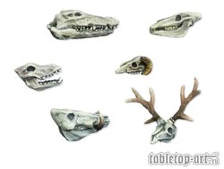 Animalskull Set (6)